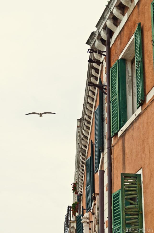 Birds and windows